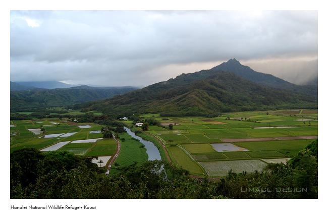 kauai_5.jpg